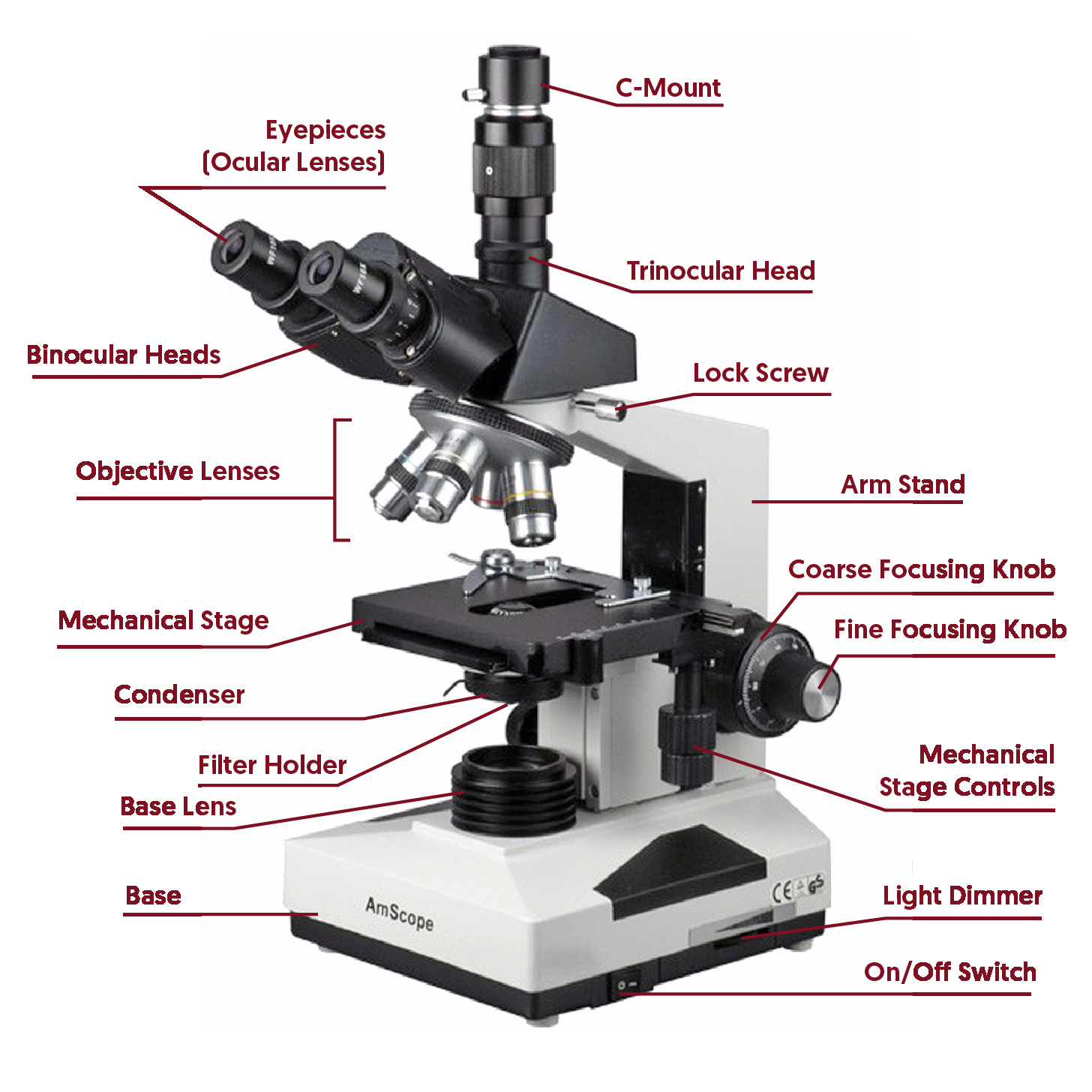 Parts Of A Microscope Worksheet Best Of Parts A Pound Microscope Worksheet