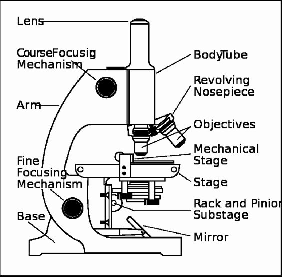 Parts Of A Microscope Worksheet Inspirational Parts Of A Microscope Worksheet