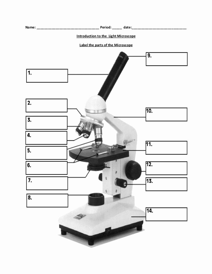 Parts Of A Microscope Worksheet New Biology Label Part Of Microscope