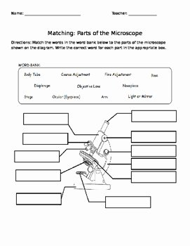 Parts Of A Microscope Worksheet New Parts Of the Microscope Worksheet by Amanda Behen