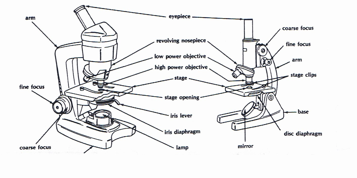 Parts Of A Microscope Worksheet Unique Microscopes
