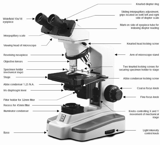 Parts Of A Microscope Worksheet Unique Science Teacher It S the World Not the Microscope that