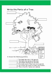 Parts Of A Tree Worksheet Awesome English Exercises Parts Of A Tree 1