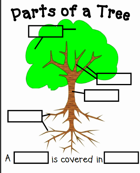 Parts Of A Tree Worksheet Awesome Kinderpond Tree