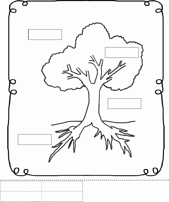 Parts Of A Tree Worksheet Awesome Supporting Tactile with Real Experience and