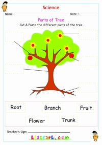 Parts Of A Tree Worksheet Beautiful Name the Flowers