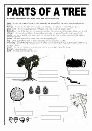 Parts Of A Tree Worksheet Beautiful Parts Of A Tree Worksheets