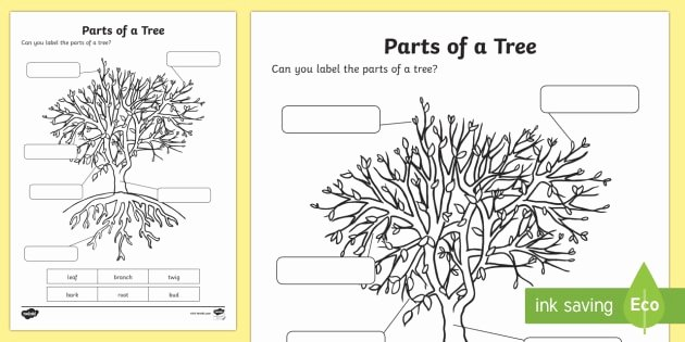 Parts Of A Tree Worksheet Beautiful the Parts Of A Tree Worksheet Activity Sheet National Tree