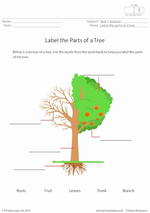 Parts Of A Tree Worksheet Best Of Label the Parts Of A Tree