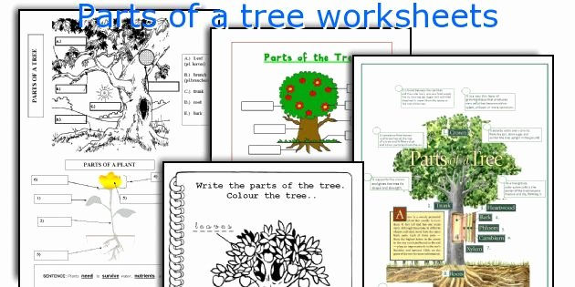 Parts Of A Tree Worksheet Best Of Parts Of A Tree Worksheets