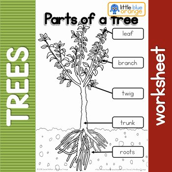Parts Of A Tree Worksheet Elegant Parts Of A Tree Worksheet by Little Blue orange