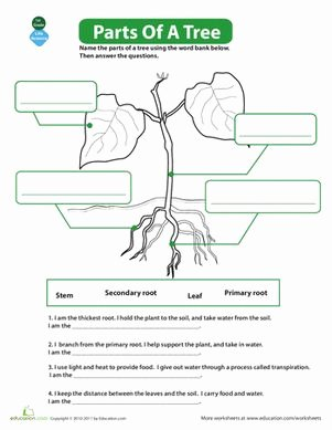 Parts Of A Tree Worksheet Fresh 17 Best Images About Tree Science for Kids On Pinterest