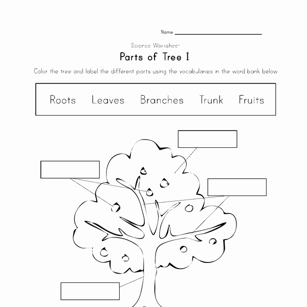 Parts Of A Tree Worksheet Fresh Parts Of A Tree Worksheet