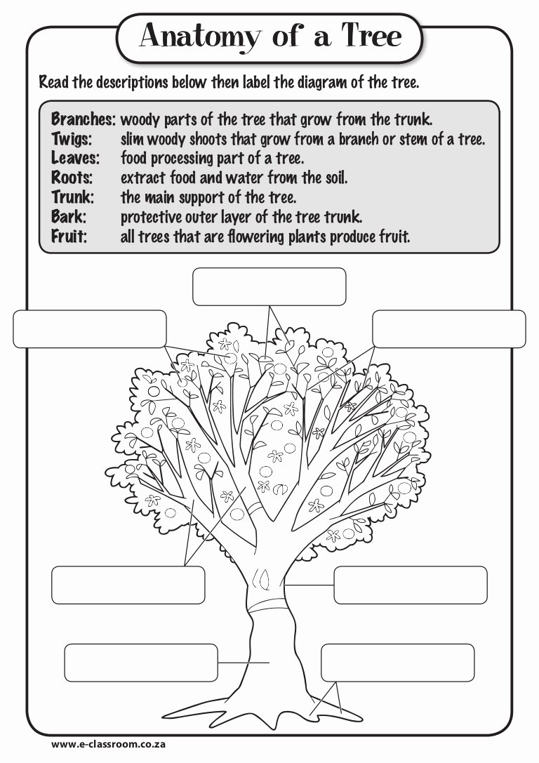 Parts Of A Tree Worksheet Lovely Anatomy Of Tree