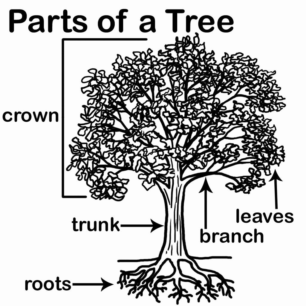 Parts Of A Tree Worksheet Lovely Kid S Edible Gdn Docs Mississauga Master Gardeners