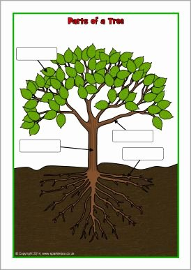 Parts Of A Tree Worksheet Lovely Parts Of A Tree Poster Worksheet Sb Sparklebox