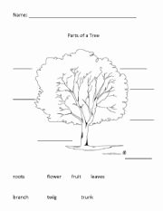 Parts Of A Tree Worksheet Luxury Parts Of A Tree Worksheets
