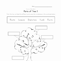 Parts Of A Tree Worksheet Luxury Plant Worksheets