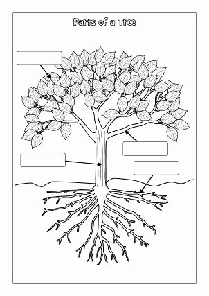 Parts Of A Tree Worksheet Luxury Trees Primary Teaching Resources and Printables Sparklebox