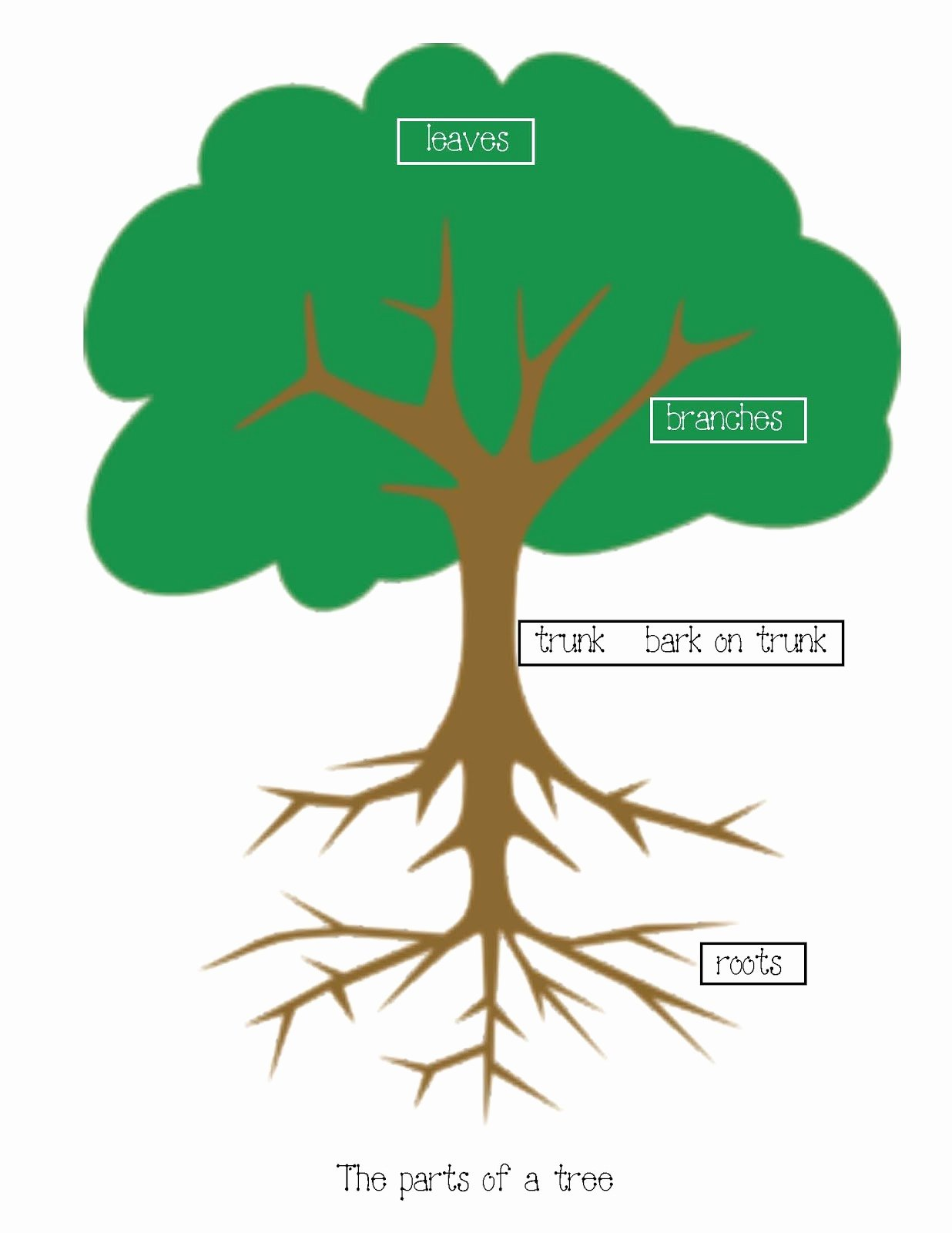 Parts Of A Tree Worksheet New assistive Technology assessing My Pre Lesson