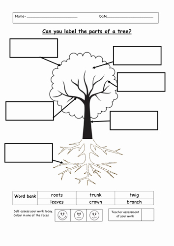Parts Of A Tree Worksheet New Label the Parts Of A Tree by Ruthbentham Teaching