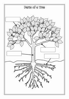 Parts Of A Tree Worksheet New Parts Of A Tree Worksheet