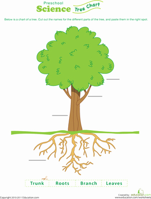 Parts Of A Tree Worksheet New Test Your Tree Knowledge Worksheet