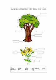 Parts Of A Tree Worksheet Unique Parts Of A Tree Esl Worksheet by Uthe