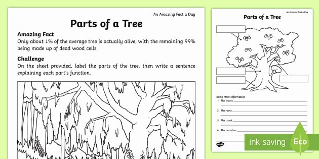 Parts Of A Tree Worksheet Unique Parts Of A Tree Worksheet Worksheet Amazing Fact