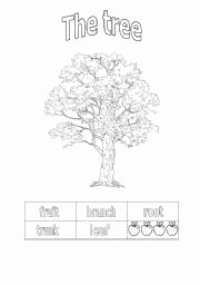 Parts Of A Tree Worksheet Unique Parts Of A Tree Worksheets