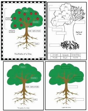 Parts Of A Tree Worksheet Unique the 4 Seasons Of My Apple Tree Apple Activities