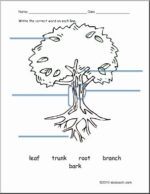 Parts Of A Tree Worksheet Unique Worksheet Esl Vocabulary Tree