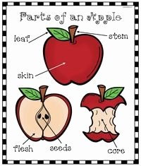 Parts Of An Apple Worksheet Awesome 1000 Images About Apple Activities On Pinterest