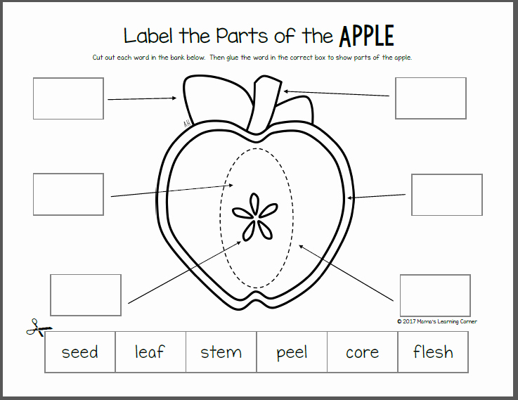 Parts Of An Apple Worksheet Awesome Apple Life Cycle Worksheets Mamas Learning Corner