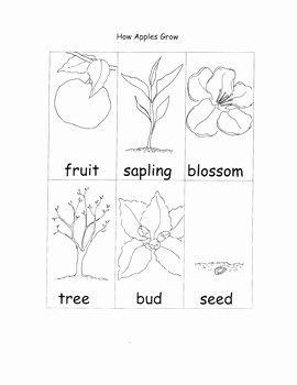 Parts Of An Apple Worksheet Awesome Apple Printable Worksheets Life Cycle Seasons Parts Of