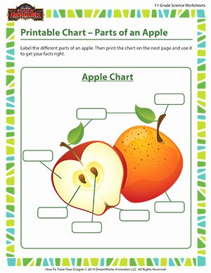 Parts Of An Apple Worksheet Awesome Parts Of An Apple Science Printable Charts for Kids sod