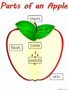Parts Of An Apple Worksheet Beautiful the Counting Apples Worksheet Here