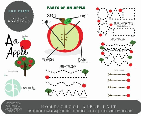 Parts Of An Apple Worksheet Best Of Apple Unit Apple Study Worksheet Montessori Charlotte
