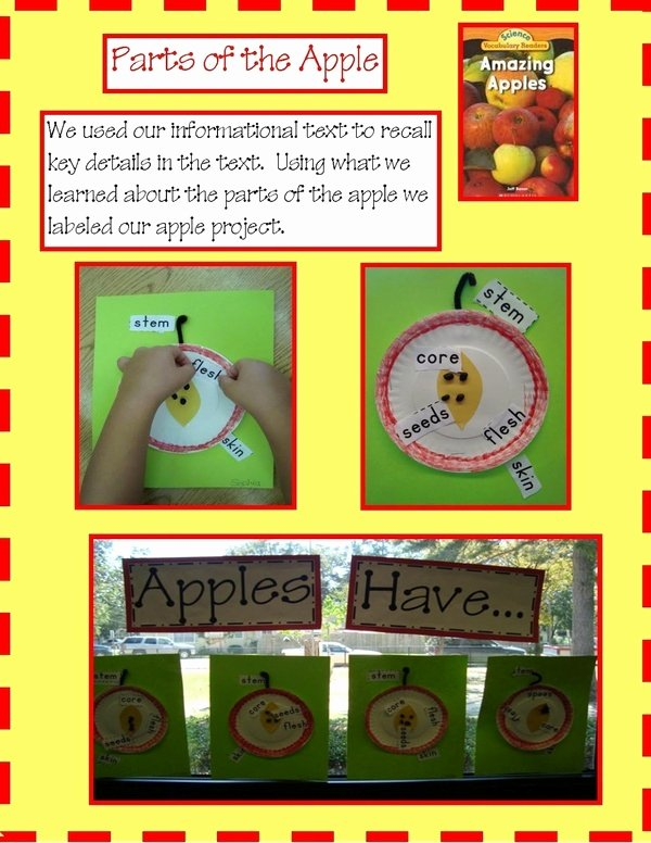 Parts Of An Apple Worksheet Elegant 34 Best Images About Apples On Pinterest