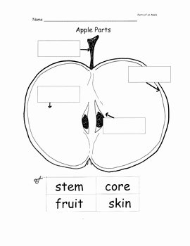 Parts Of An Apple Worksheet Elegant Apple Printable Worksheets Life Cycle Seasons Parts Of
