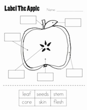 Parts Of An Apple Worksheet Elegant Best 25 Johnny Appleseed Ideas On Pinterest