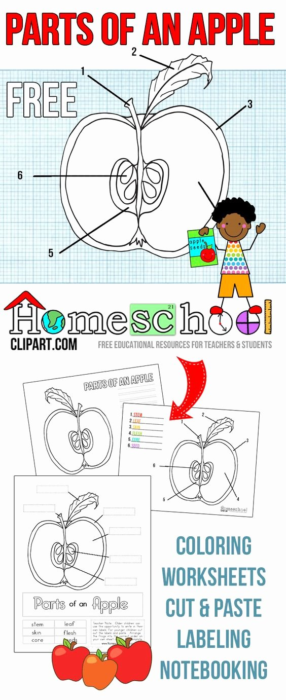 Parts Of An Apple Worksheet Elegant Free Parts Of An Apple Activity Worksheets This Set