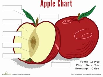 Parts Of An Apple Worksheet Fresh 18 Best Apples Images On Pinterest