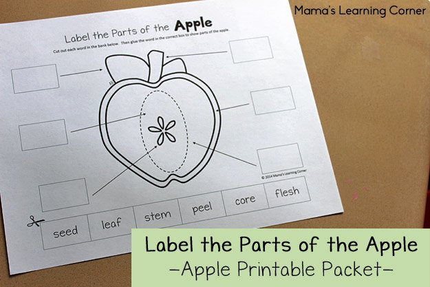 Parts Of An Apple Worksheet Fresh Apple Life Cycle Worksheets Mamas Learning Corner