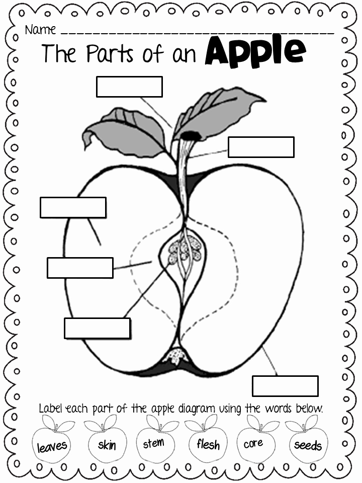 Parts Of An Apple Worksheet Fresh forkin4th Freebie Parts Of An Apple