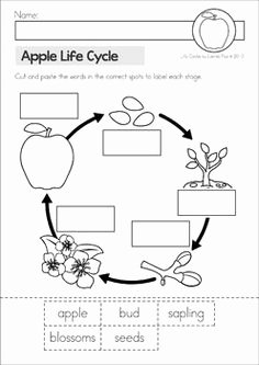 Parts Of An Apple Worksheet Fresh Freebie Parts Of An Apple Apples Pinterest
