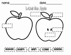 Parts Of An Apple Worksheet Inspirational 1000 Images About Label the Apple On Pinterest
