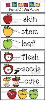 Parts Of An Apple Worksheet Inspirational Parts Of An Apple Emergent Reader Packet by Teach with Me