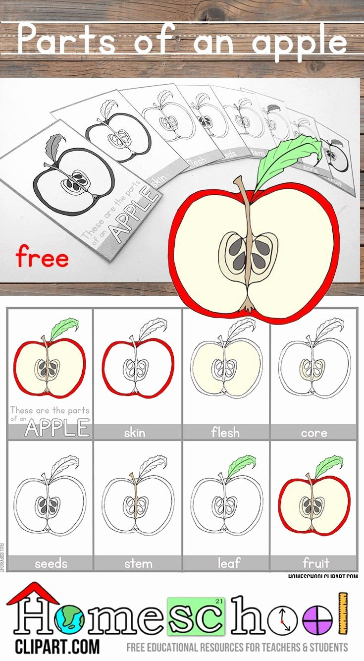 Parts Of An Apple Worksheet Lovely 103 Best Images About Apple theme On Pinterest