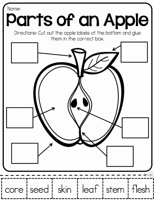 Parts Of An Apple Worksheet Luxury Apples Lap Book Kindergarten